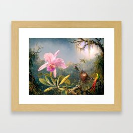 Nature's Fantasy : Cattyela Orchid and Three Brazilian Hummingbirds Framed Art Print