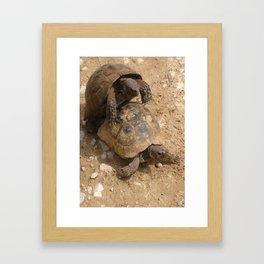 Slow Love - Tortoises Framed Art Print