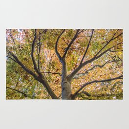 Beautiful Trees / 12 Rug