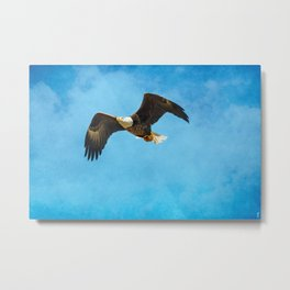 Early Spring Flight - Bald Eagle Metal Print
