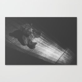 Find The Light  Canvas Print