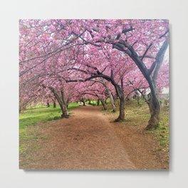 Blossoms in Bloom Metal Print