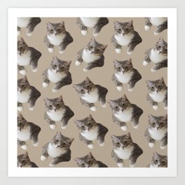beige tan grey american wirehair cat pattern Art Print