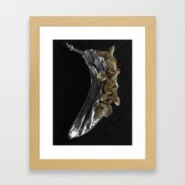 Silver Fruit 1 Framed Art Print