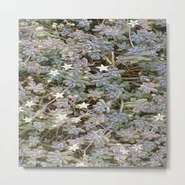 Starflower Metal Print