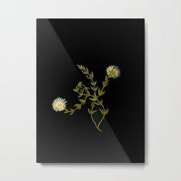 Mesembryanthemum Splendens Mary Delany Delicate Paper Flower Collage Black Background Floral Botanic Metal Print
