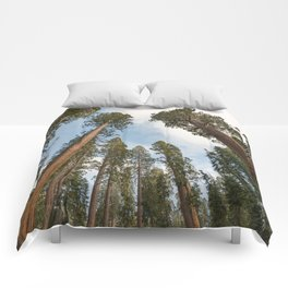 Redwood Sky - Giant Sequoia Trees Comforters