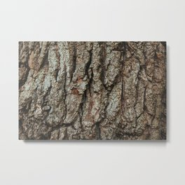 Old English Oak Bark Metal Print