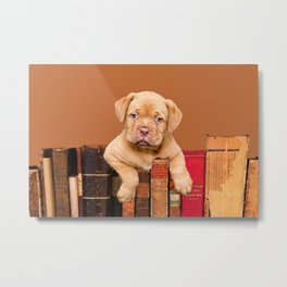 Old Books and Bordeaux Bulldog puppy Metal Print