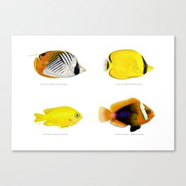 Plate of Tropical Fish Canvas Print
