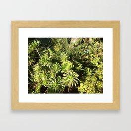 Succulent surprise Framed Art Print