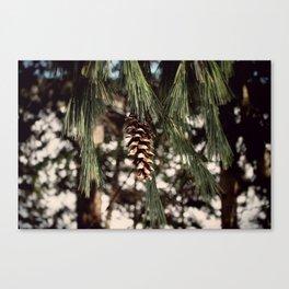 The Last Pine Cone Canvas Print