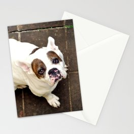 pet Stationery Cards