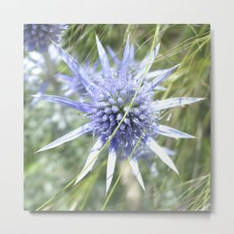 Sea Holly Metal Print