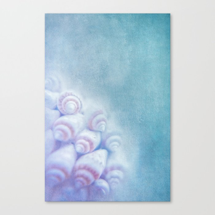 BELLA BLEU - Still life with sea shells Canvas Print