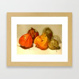 Physalis Part II. Framed Art Print