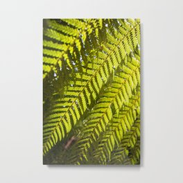 Sunlit Ferns Metal Print