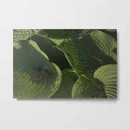 Hosta After a Rain Metal Print