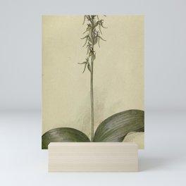 Vintage Botanical Print - Hooker's Orchid Mini Art Print