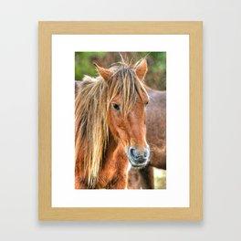 Pony Profile  Framed Art Print
