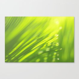 Palm tree leaves Tropical summer green yellow jungle Canvas Print