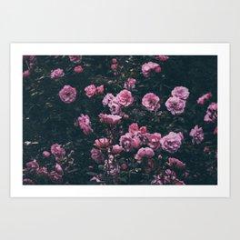 Roses again Art Print