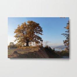 grand old oak tree Metal Print