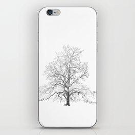 Sycamore Tree iPhone Skin