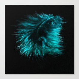 Feather in green-turquoise Canvas Print
