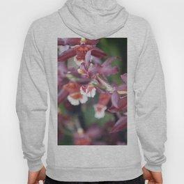Longwood Gardens Orchid Extravaganza 77 Hoody