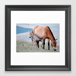 Baby Horse... Framed Art Print