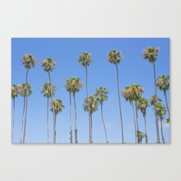 Palm Trees and Blue SKy Canvas Print