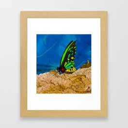 Black and Green Butterfly Framed Art Print