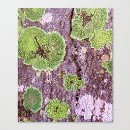 Tree Bark Pattern with Lichen #7 Canvas Print