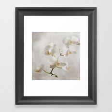 orchid (white) Framed Art Print