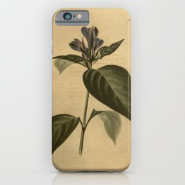 Flower justicia retusa26 iPhone Case