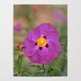 Lynda Anne Art Flower Poster