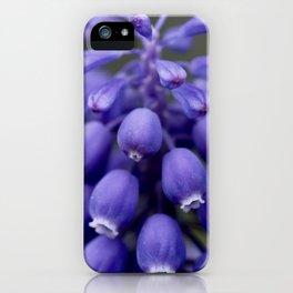 Macro Grape Hyacinth 1 iPhone Case