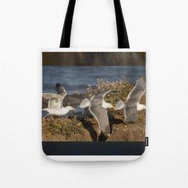 California Seagull (Larus californicus) taking off from a bluff in Mendocino, California. Tote Bag