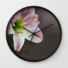 March Amaryllis Wall Clock