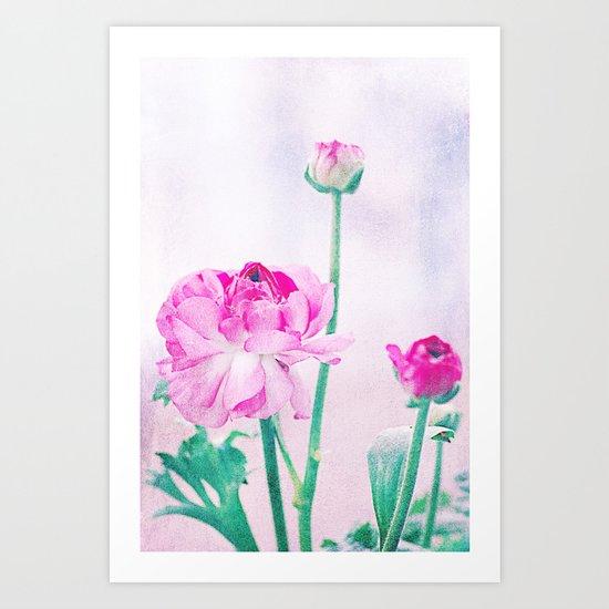 Vintage Ranunculus (7) Art Print