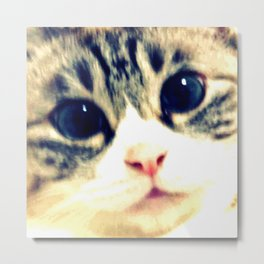 My name is chill of pink nose and blue eyes. I Love Cat. (Clear) Metal Print