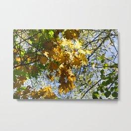 one branch of oak Metal Print