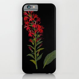 Lobelia Cardinalis  by Mary Delany Paper Collage Floral Flower Botanical Paper Mosaic Vintage Scientific Plant Anatomy iPhone Case