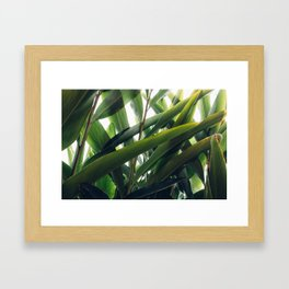 Topical Framed Art Print