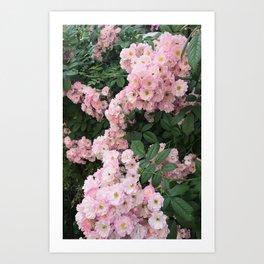 Flowers Bloom Art Print