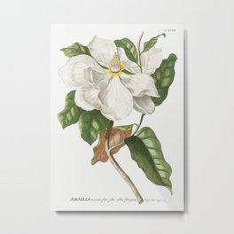 Plantae Selectae No 33-Magnolia by Georg Dionysius Ehret Metal Print