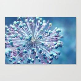 Allium 79 Canvas Print