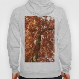 Fall around you, there are leaves. Hoody