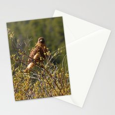 Red-tailed Hawk in the Tetons Stationery Cards